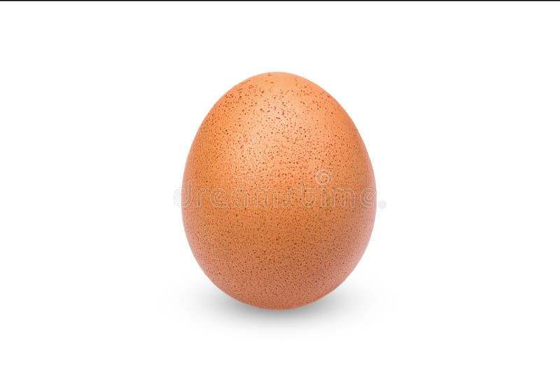 Oeuf brun simple de poulet sur le blanc image libre de droits