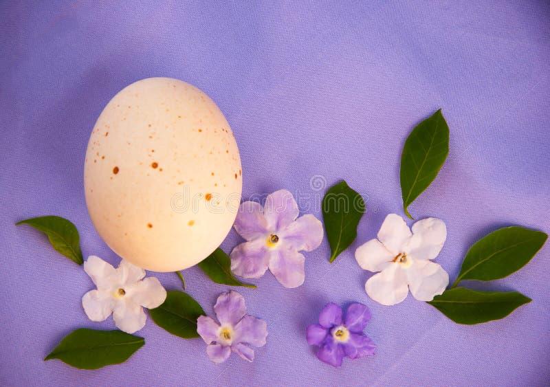 Oeuf et fleurs sur le fond pourpre de textile photographie stock libre de droits