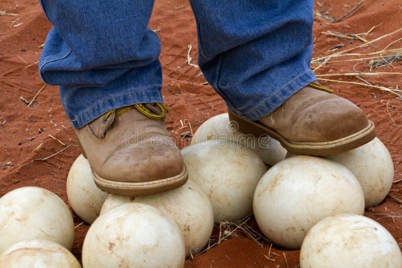 Oeufs 1 d'autruche photo libre de droits