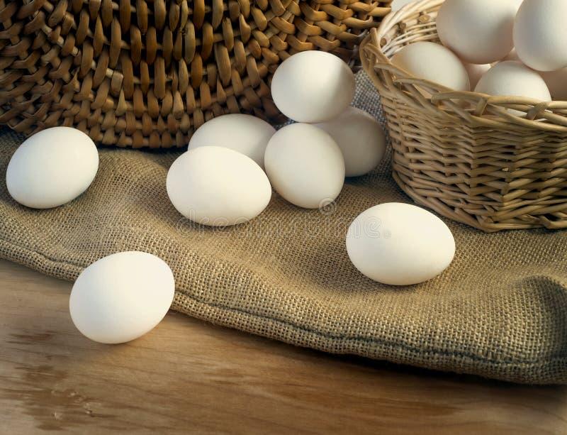 Oeufs blancs frais de poulet photos libres de droits
