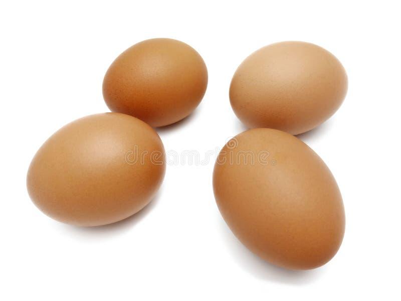 Oeufs bruns frais crus de poulet photo stock