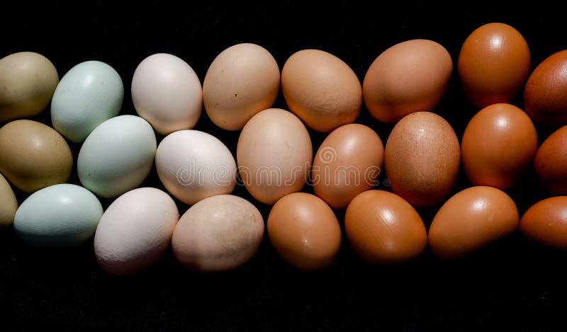 Oeufs colorés dans le brun pour verdir toujours les tons naturels im de gradient images libres de droits
