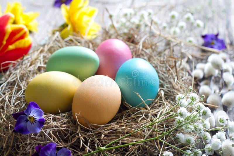 Oeufs colorés de Pâques dans le nid avec des fleurs sur les panneaux en bois de cru images stock