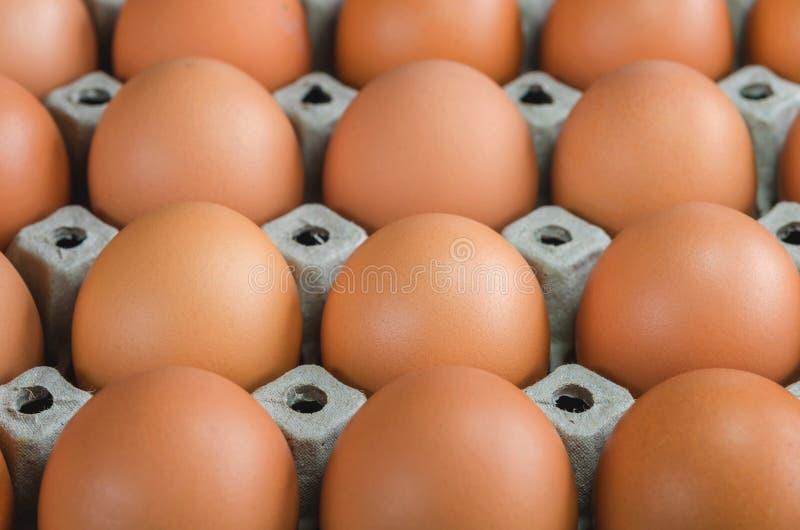 Oeufs crus en gros plan de poulet images stock
