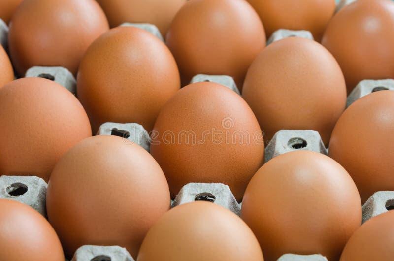 Oeufs crus en gros plan de poulet images libres de droits
