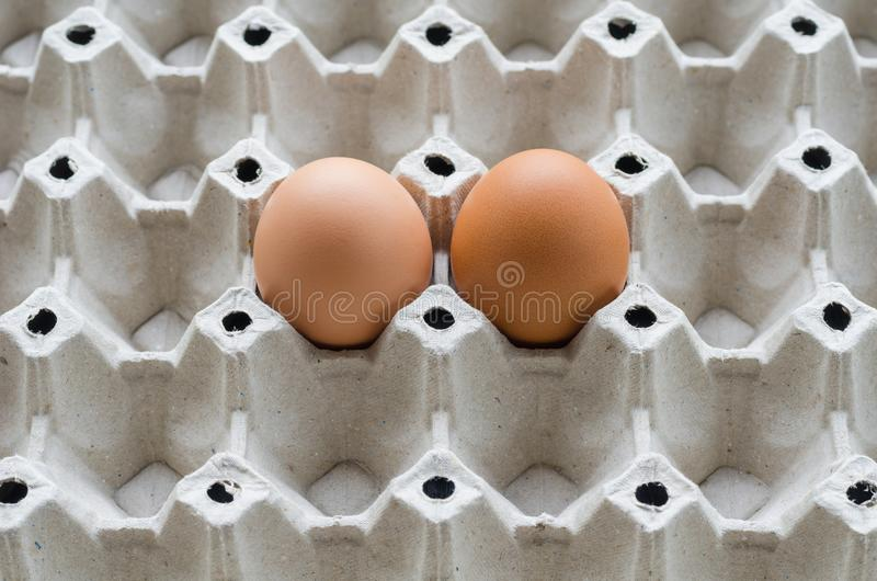 Oeufs crus en gros plan de poulet photo stock