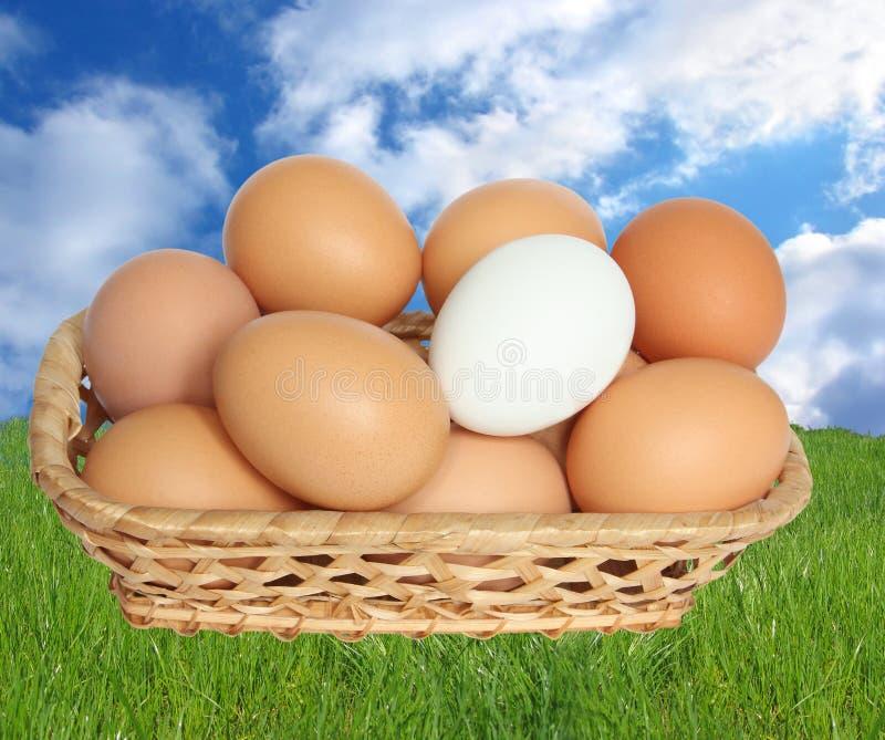 Download Oeufs dans le panier. image stock. Image du manger, protéine - 8657689