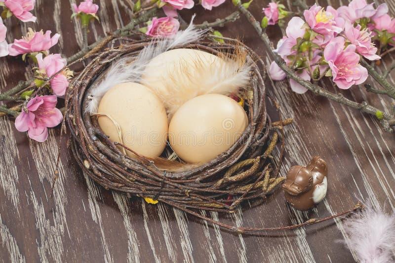 Oeufs dans un nid de fleur de ressort photographie stock libre de droits