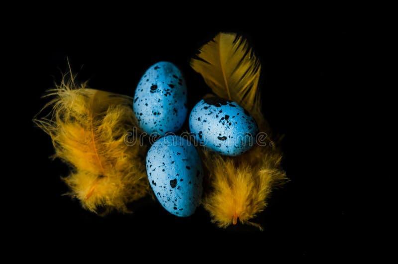 Oeufs de caille bleus sur un fond noir et des plumes jaunes et lumineuses photographie stock libre de droits