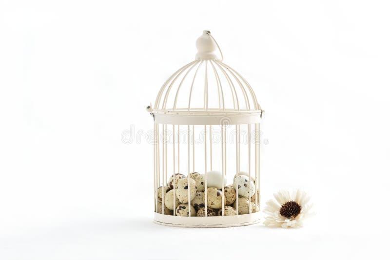 Oeufs de caille dans la cage de vintage d'isolement sur le fond blanc photo stock