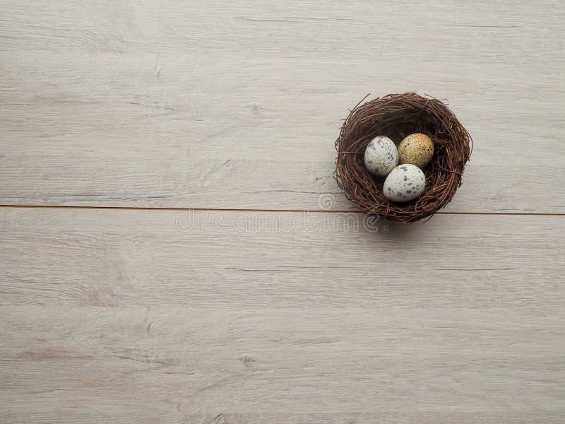 oeufs de caille dans un nid sur un concept en bois de Pâques de fond photos libres de droits