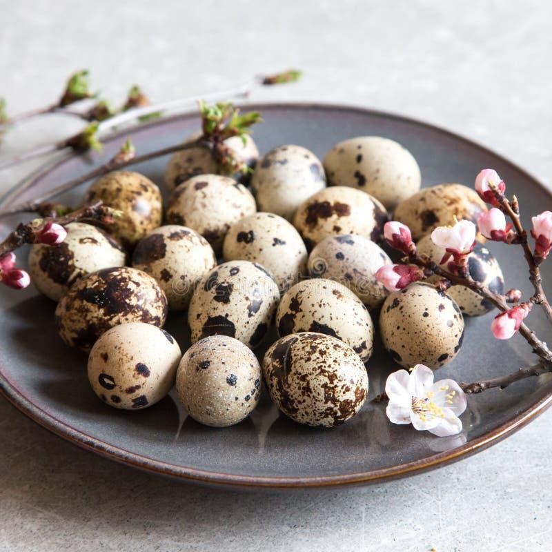 Oeufs de caille frais organiques naturels E photos stock