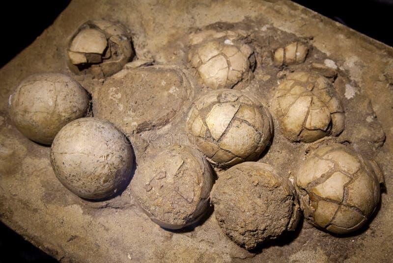 Oeufs de dinosaure dans le nid photos libres de droits