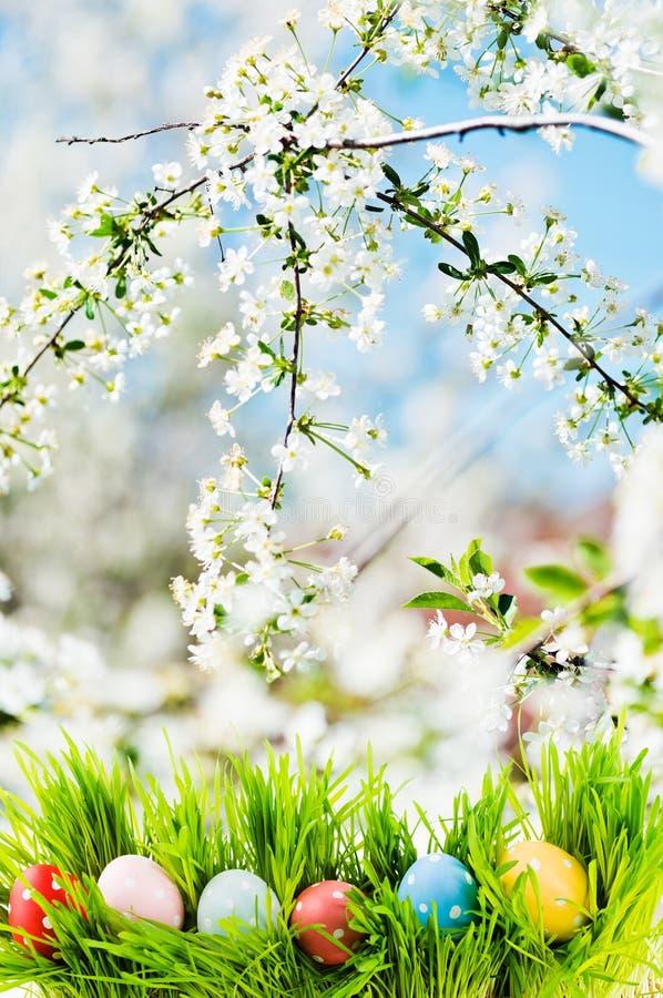 Oeufs de pâques dans l'herbe, le jardin fleurissant comme fond image stock