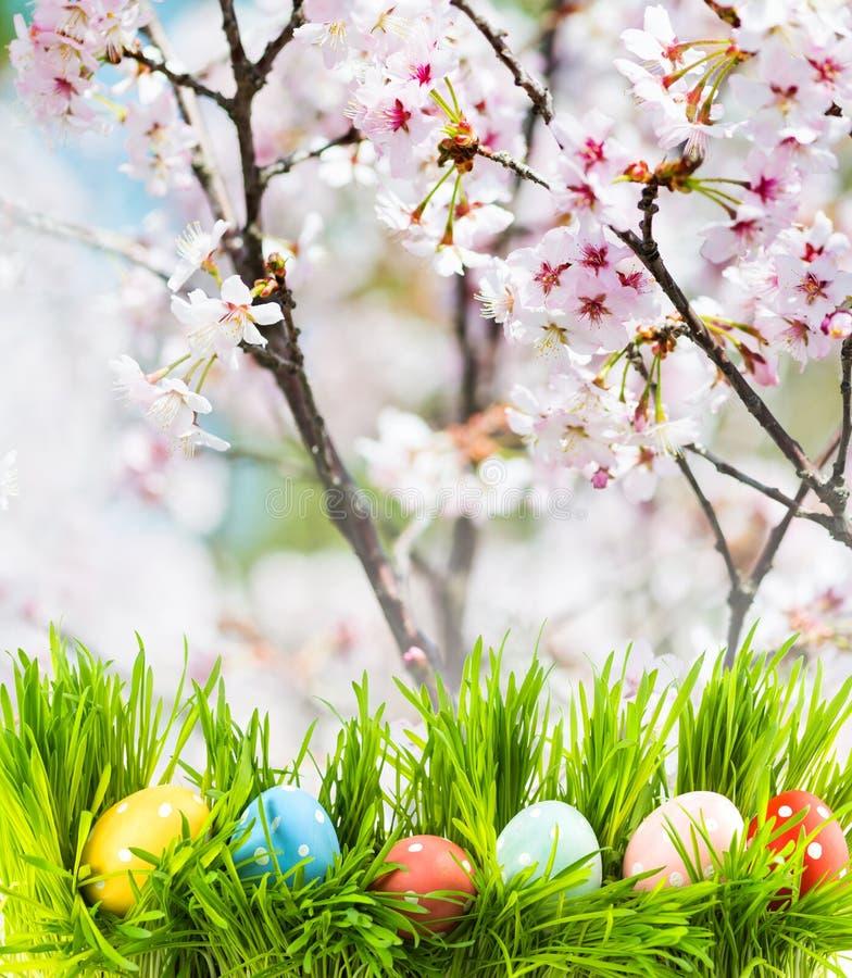 Oeufs de pâques dans l'herbe, le jardin fleurissant comme fond image libre de droits