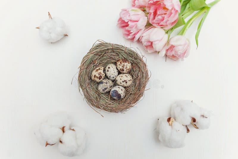 Oeufs de pâques dans le nid et les tulipes photos libres de droits