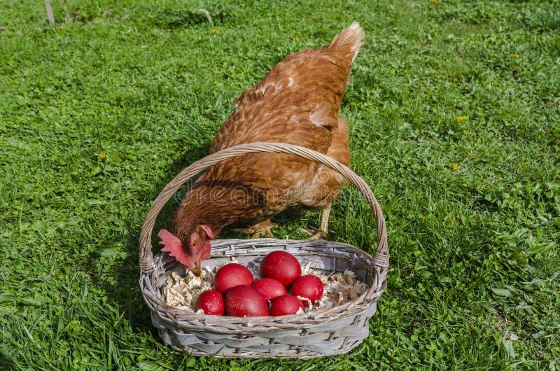 oeufs de pâques de poulet images libres de droits