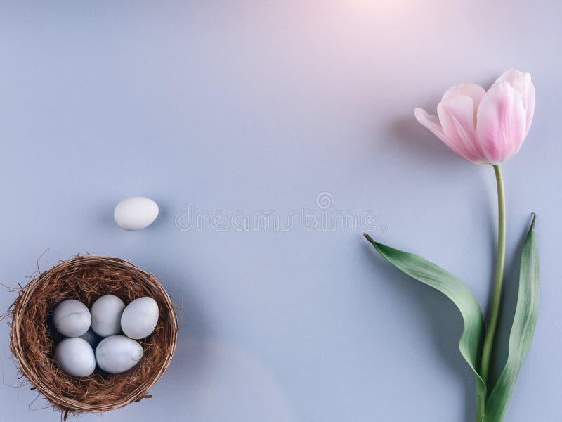 Oeufs de pâques en fleurs de nid et de tulipes sur le fond de ressort Vue supérieure avec l'espace de copie Carte de Pâques heure photo stock
