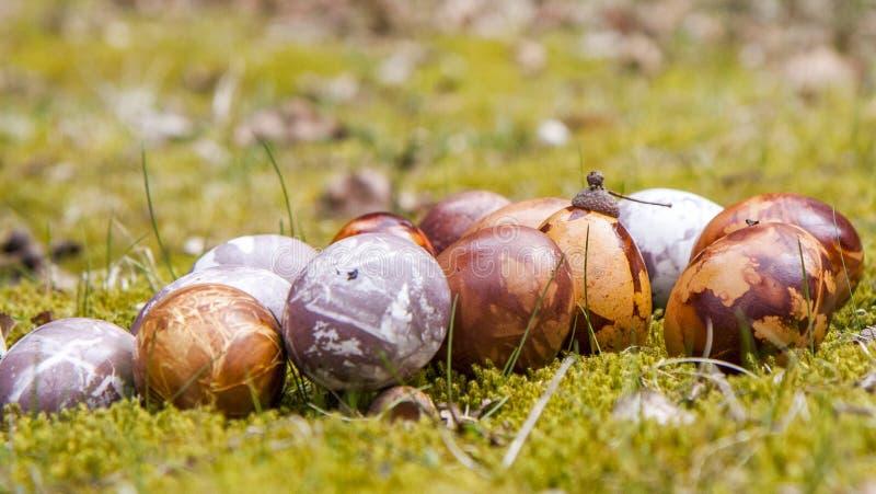 Oeufs de pâques en nature photographie stock