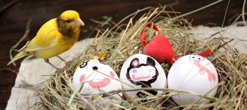 Oeufs de pâques et un oiseau jaune canari photos libres de droits