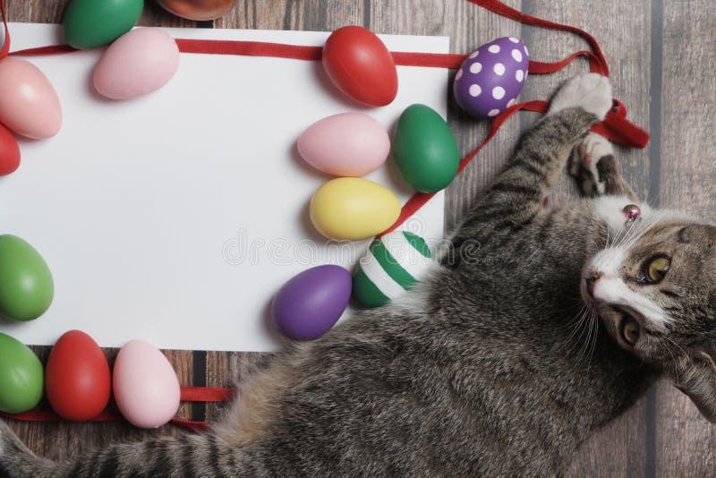 oeufs de pâques de Plat-configuration sur la table en bois avec le chat mignon photos libres de droits