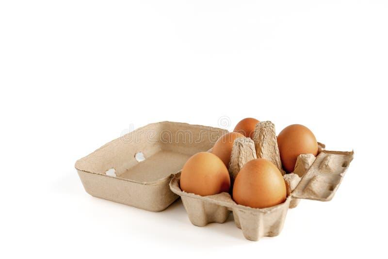 Oeufs de poulet de Brown dans un carton ouvert d'oeufs ou oeufs crus de poulet dans la boîte à oeufs d'isolement sur le fond blan photos libres de droits