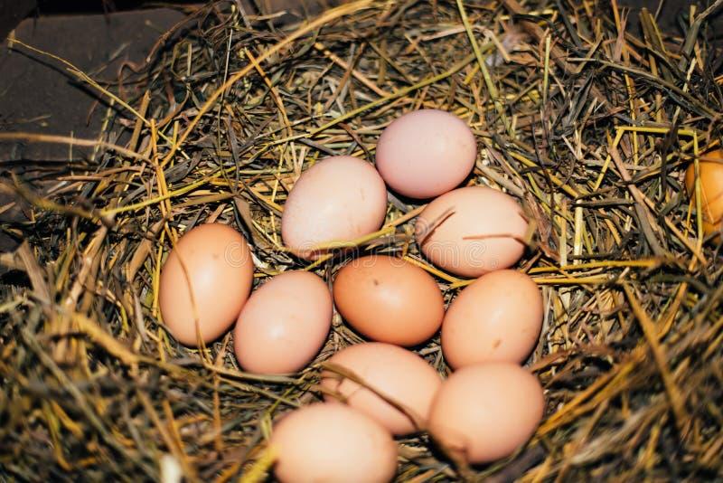 Oeufs de poulet dans l'emboîtement photo libre de droits