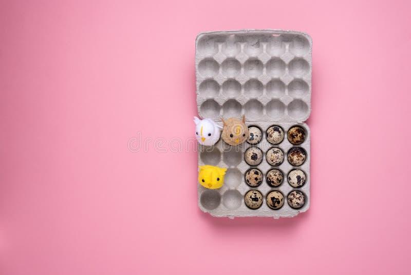 Oeufs et oiseau de caille dans la boîte en carton sur le fond rose images stock