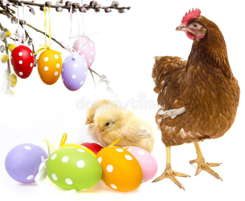 Oeufs et poulets de pâques photos libres de droits
