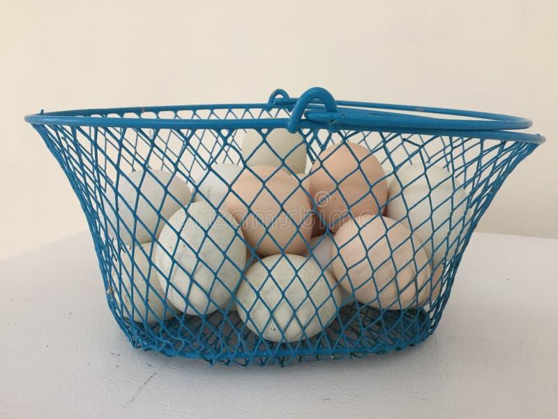Oeufs fraîchement recueillis dans un casier métallique bleu photo libre de droits