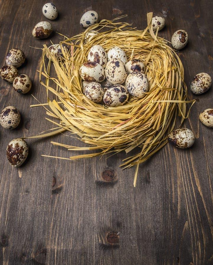 Oeufs frais de caille pondus dans le nid et autour sur la table en bois sur la fin rustique en bois de vue supérieure de fond  photos stock