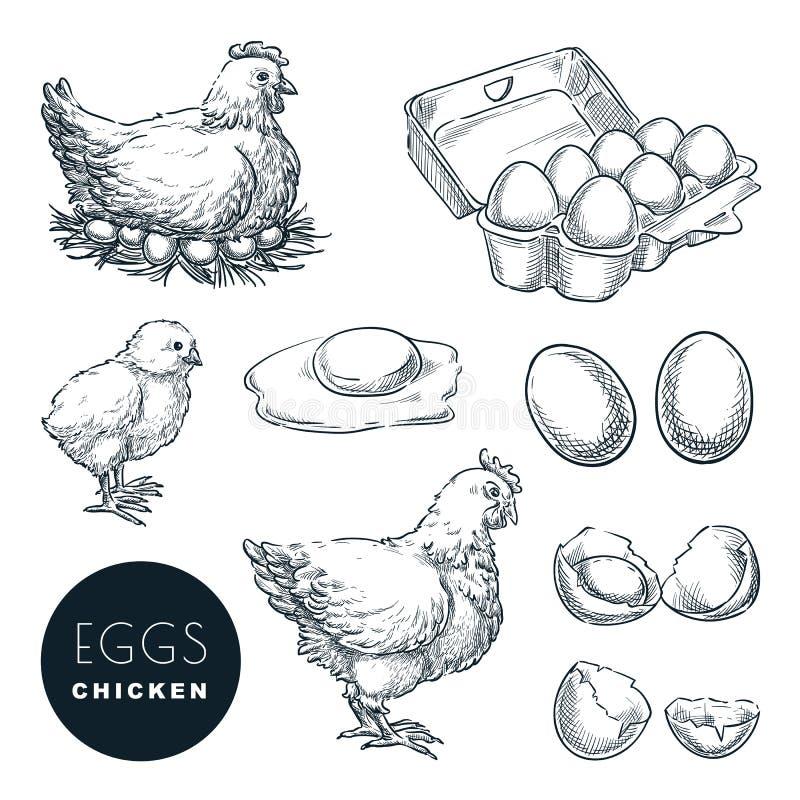 Oeufs frais de ferme de poulet Ensemble de vecteur d'éléments de conception de croquis Poule tirée par la main, volaille et petit illustration libre de droits