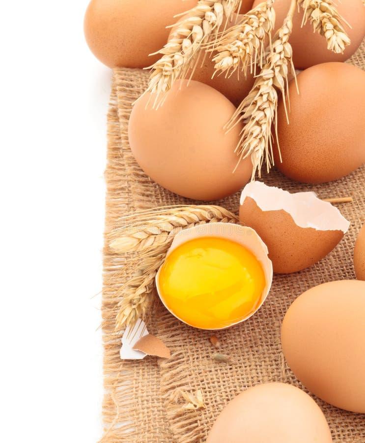 Oeufs frais de poulet photo libre de droits