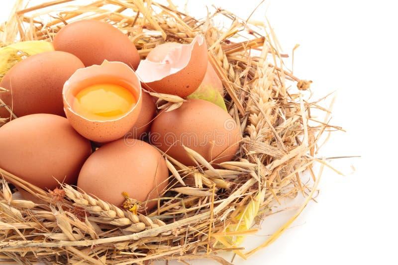 Oeufs frais de poulet photographie stock libre de droits