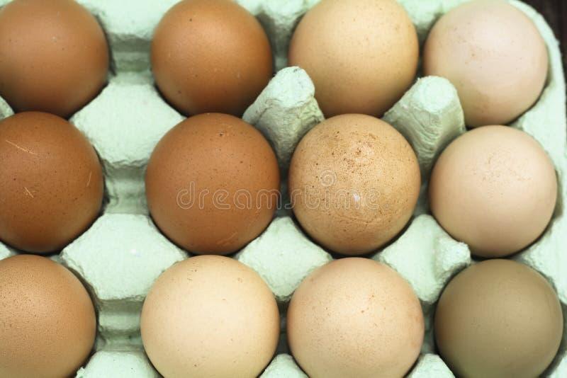 Oeufs free-range frais de poulet images libres de droits