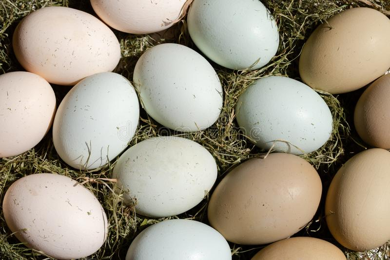 Oeufs libres multicolores simples de gamme sur le foin comme décoration de Pâques photo libre de droits