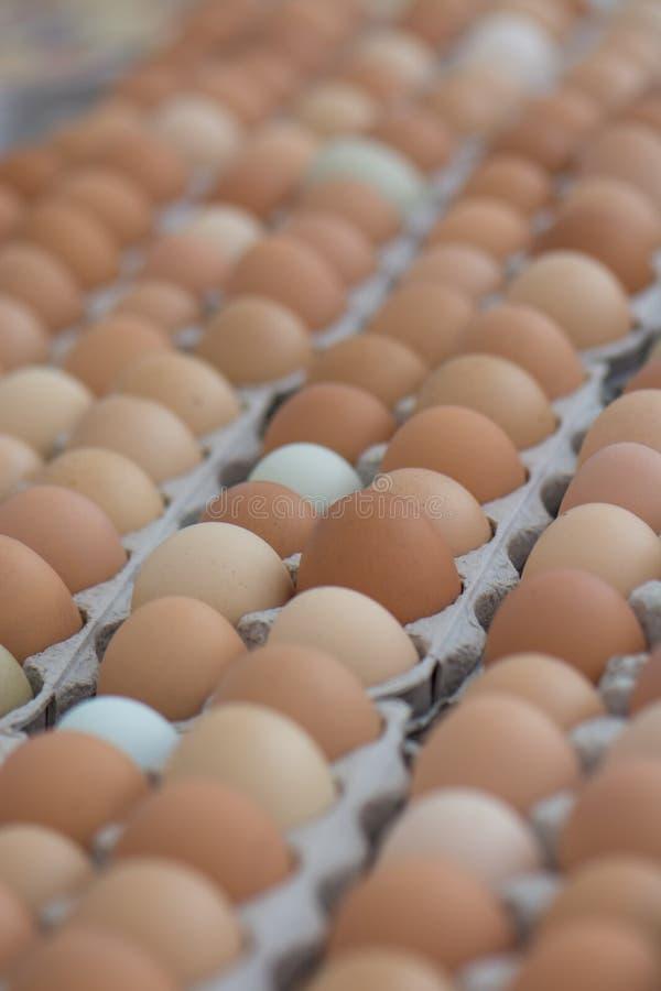 Oeufs multicolores à un marché d'agriculteurs en Californie organique photographie stock libre de droits