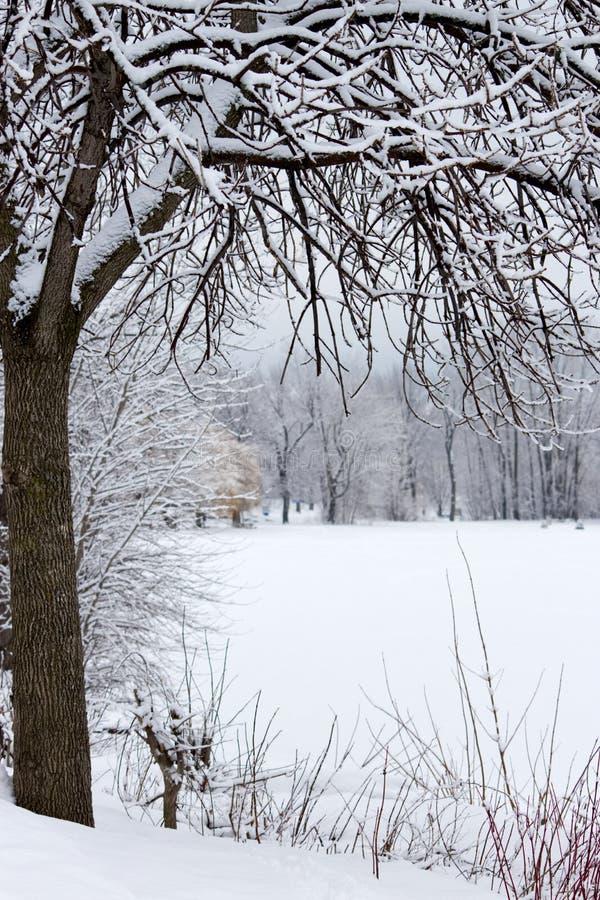Oever van het meerlandschap in de winter met bomen van sneeuw worden behandeld die royalty-vrije stock foto's