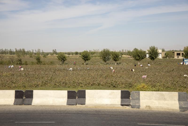 Oezbekistaanse katoenen campagnearbeiders stock foto