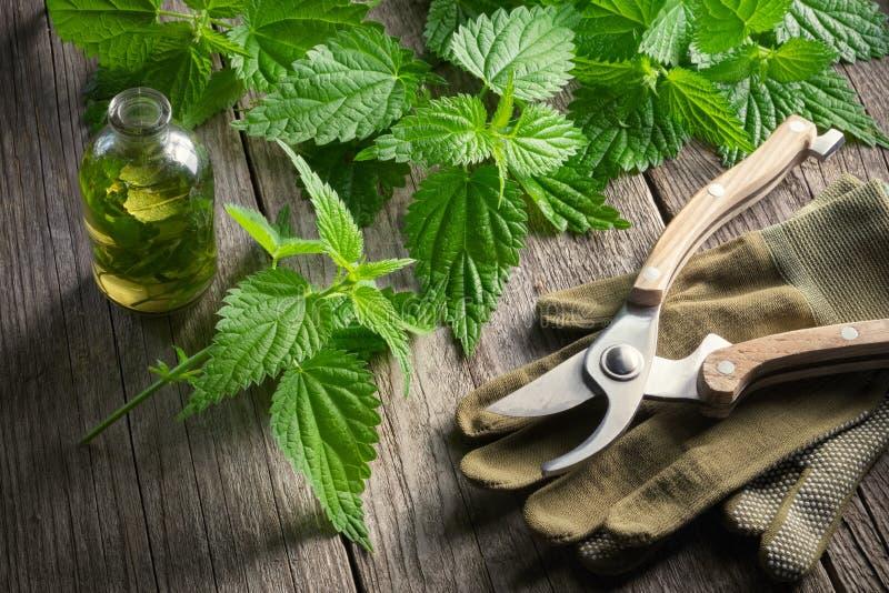 Ofenda las ramitas, botella sana de la infusión o de aceite, los guantes y pruner del jardín foto de archivo