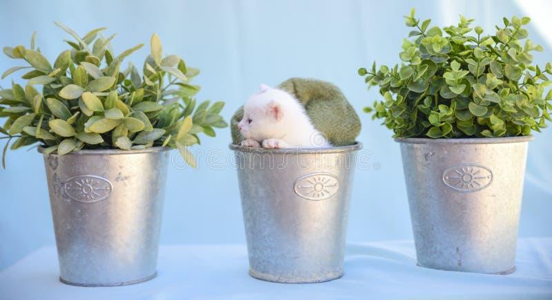 Oferta i puszysta biała figlarka wśrodku wazy wśród zielonej rośliny obraz royalty free