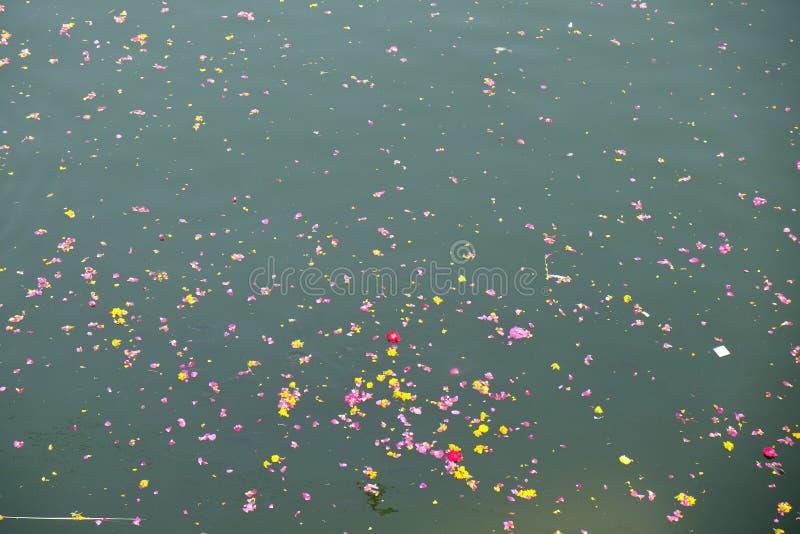 Ofertas florais coloridas, pétalas, flores e festões, flutuando no lago Pushkar, Índia fotos de stock