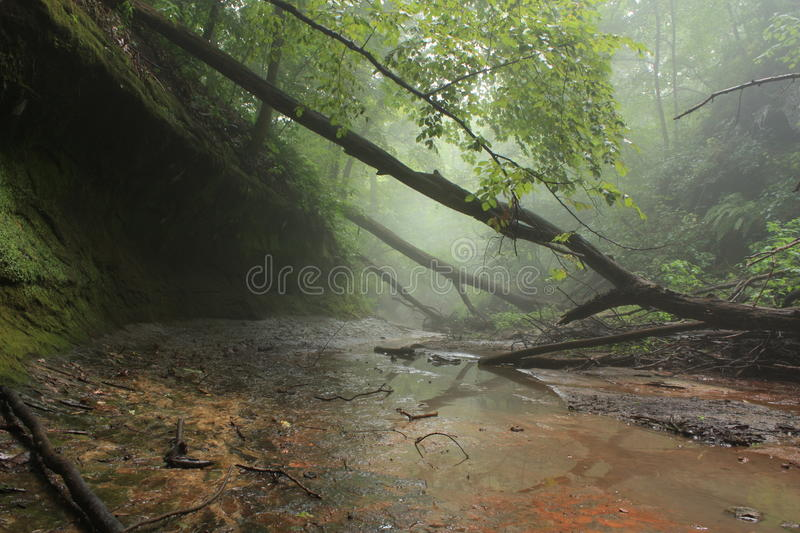 Download Off into the Mist stock photo. Image of tree, mist, moss - 10764032