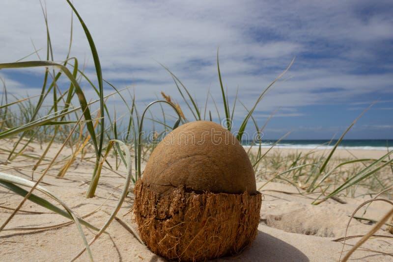 offene Kokosnuss auf dem Strand im Regenbogenstrand, Queensland, Australien Die Kokosnuss sieht wie ein Dinosaurierei aus lizenzfreies stockbild