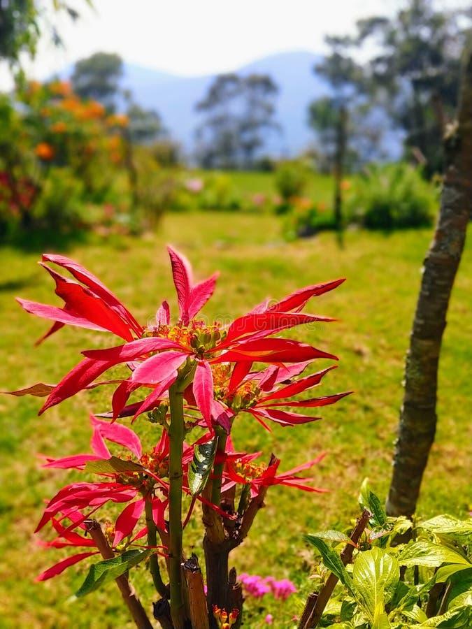 Offene Plantage von Lobelia lizenzfreie stockfotografie