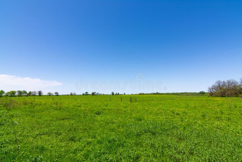Offene Rasenfläche stockbilder