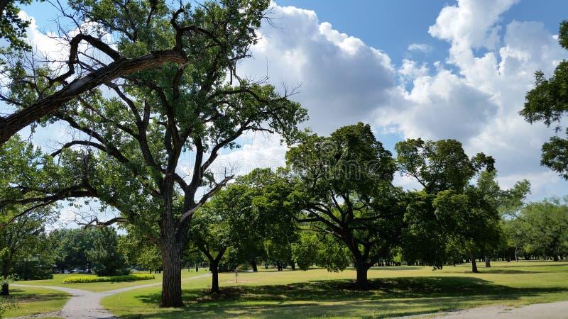 Offener Himmel mit Bäumen stockbilder