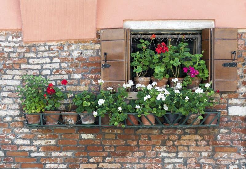 Offenes Fenster mit einer Reihe von Blumentöpfen stockfotografie