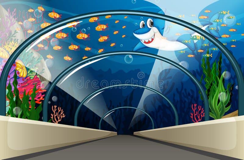 Offentligt akvarium med fisken och korallreven vektor illustrationer