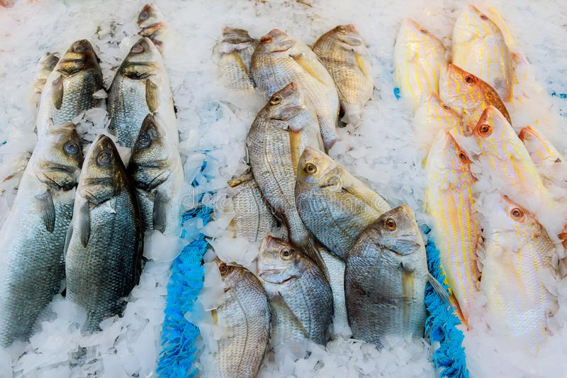 Offering of fresh fish chilled with crushed ice at a fishery, fish market or supermarket on display for shoppers. To buy for a delicious seafood dinner royalty free stock image